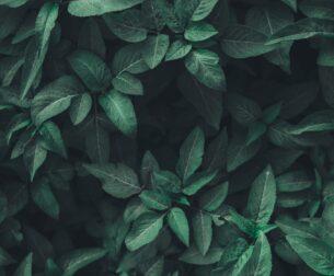 Herbal Medicine Supplier